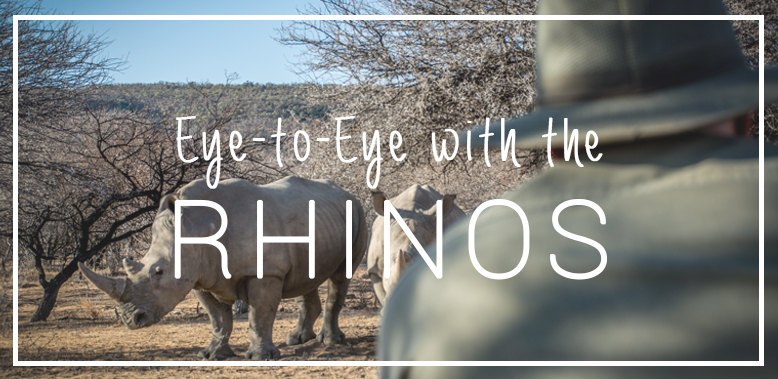 Eye-to-eye with the Rhinos at The Ant Collection