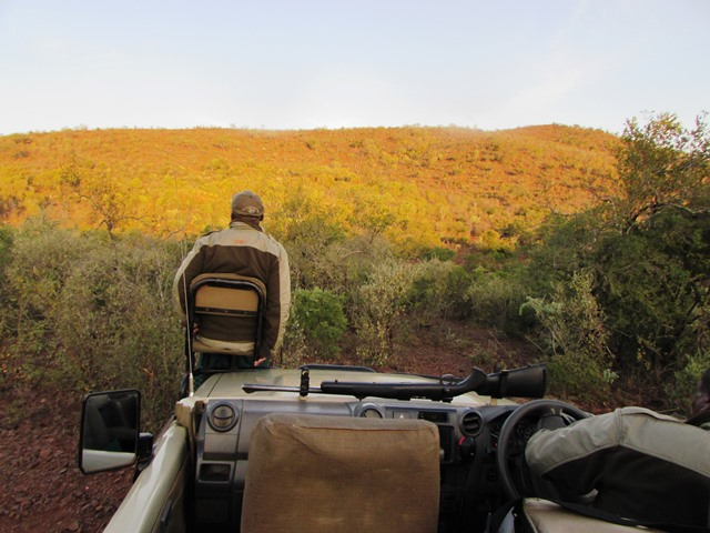 game drives at Amakhosi