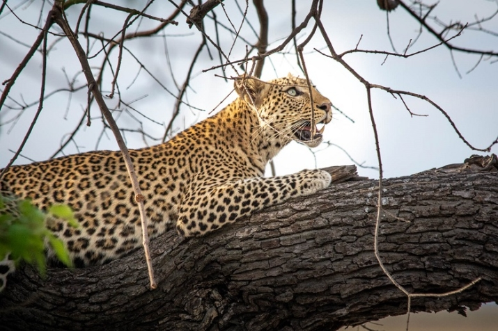 The perfect model spotted whilst on a game drive during the #ThisIsChobe campaign © Melanie Jane van Zyl / Under One Botswana Sky