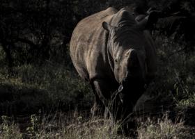 white rhino kwazulu natal