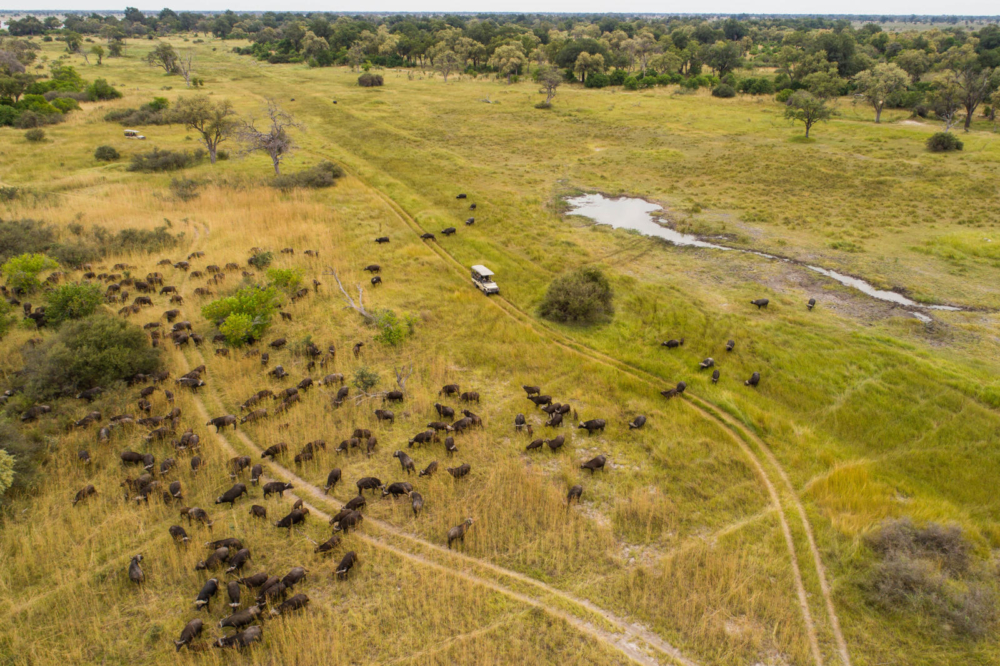 Desert and Delta, Botswana, Domestic Travel Market, Safari Camps Open
