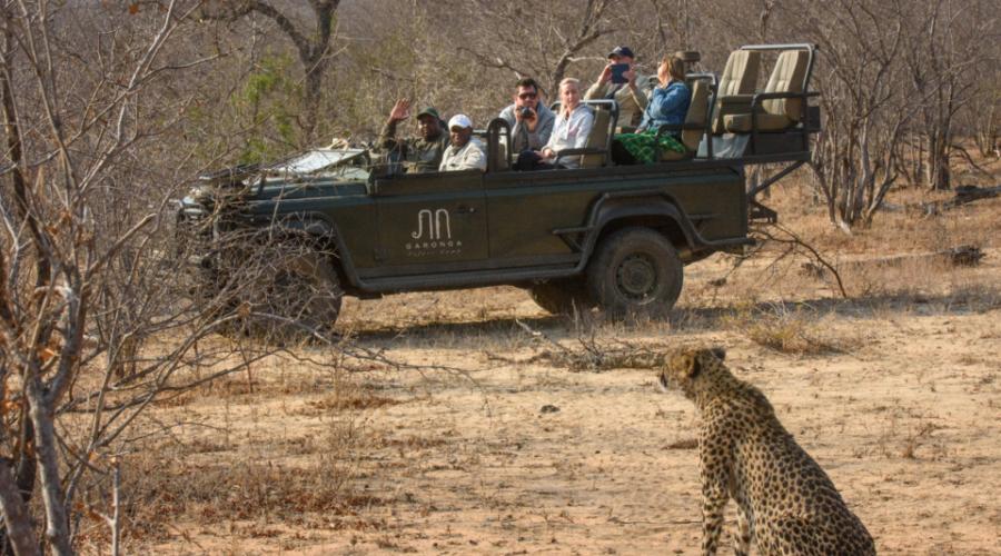 Garonga Safari, Big 5 safari South Africa, cheetah